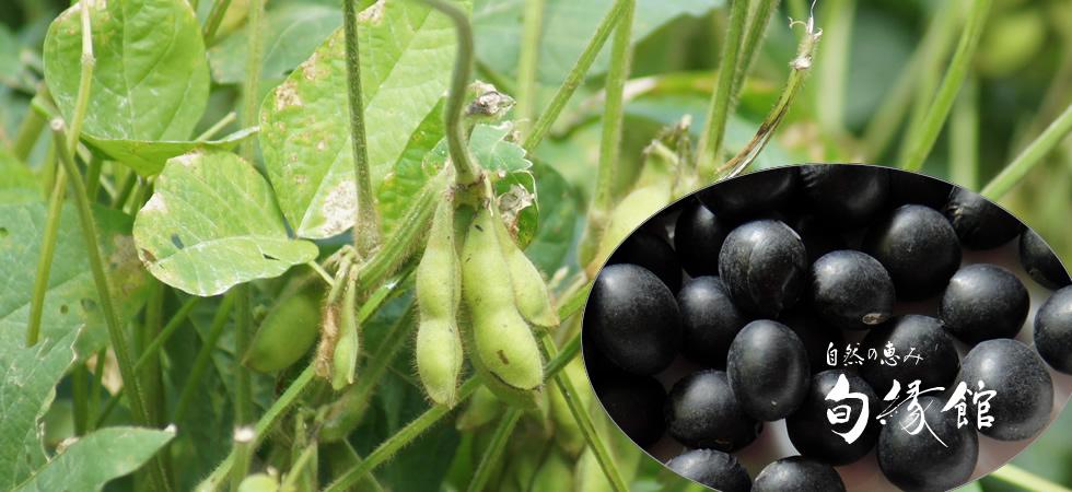 黒豆(滋賀県竜王町産)黒大豆