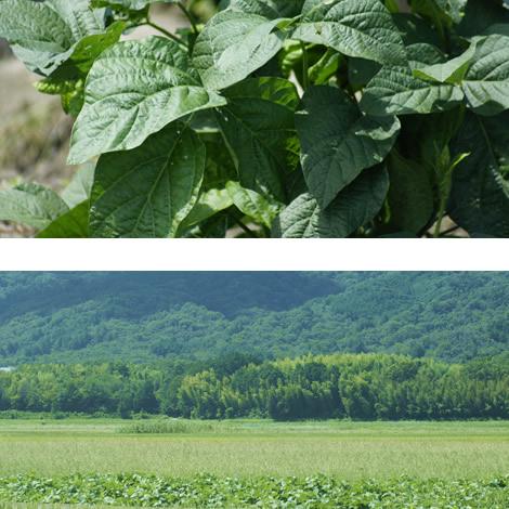 黒豆(滋賀県竜王町産)