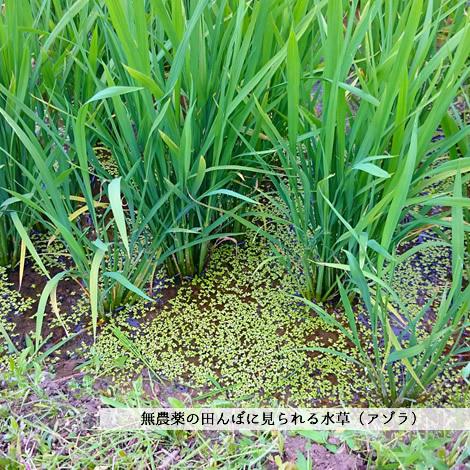 お米(滋賀県竜王町産)
